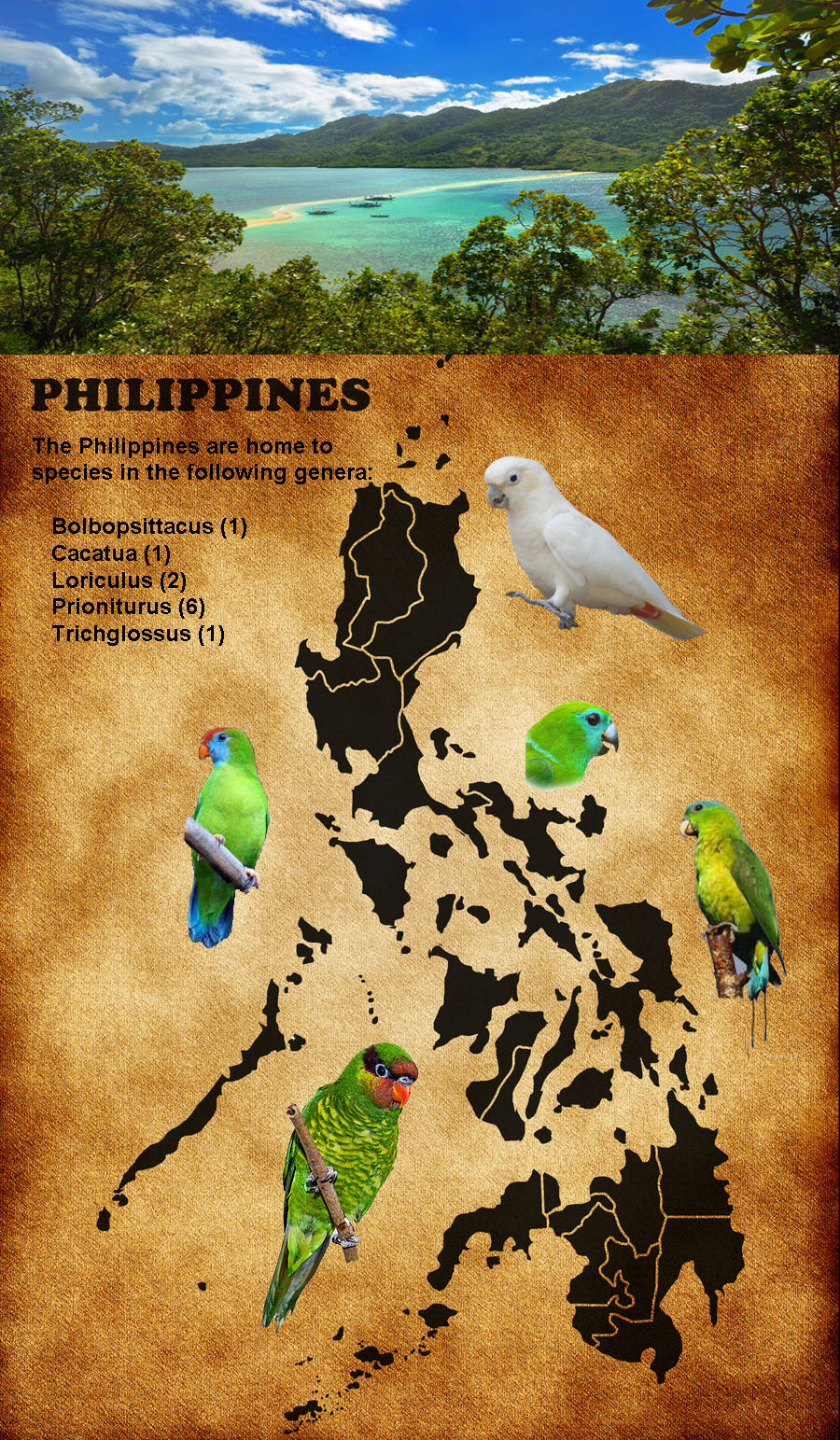 Philippine background