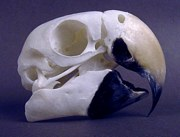 macaw beak anatomy