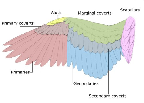 wing-feathers