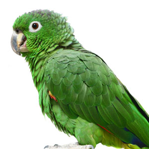 Pet Bird and Parrot Behavior – Pet Birds by Lafeber Co.
