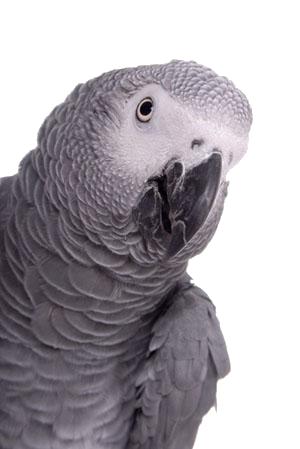 pic grey2