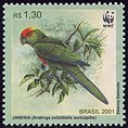 stamp Conure