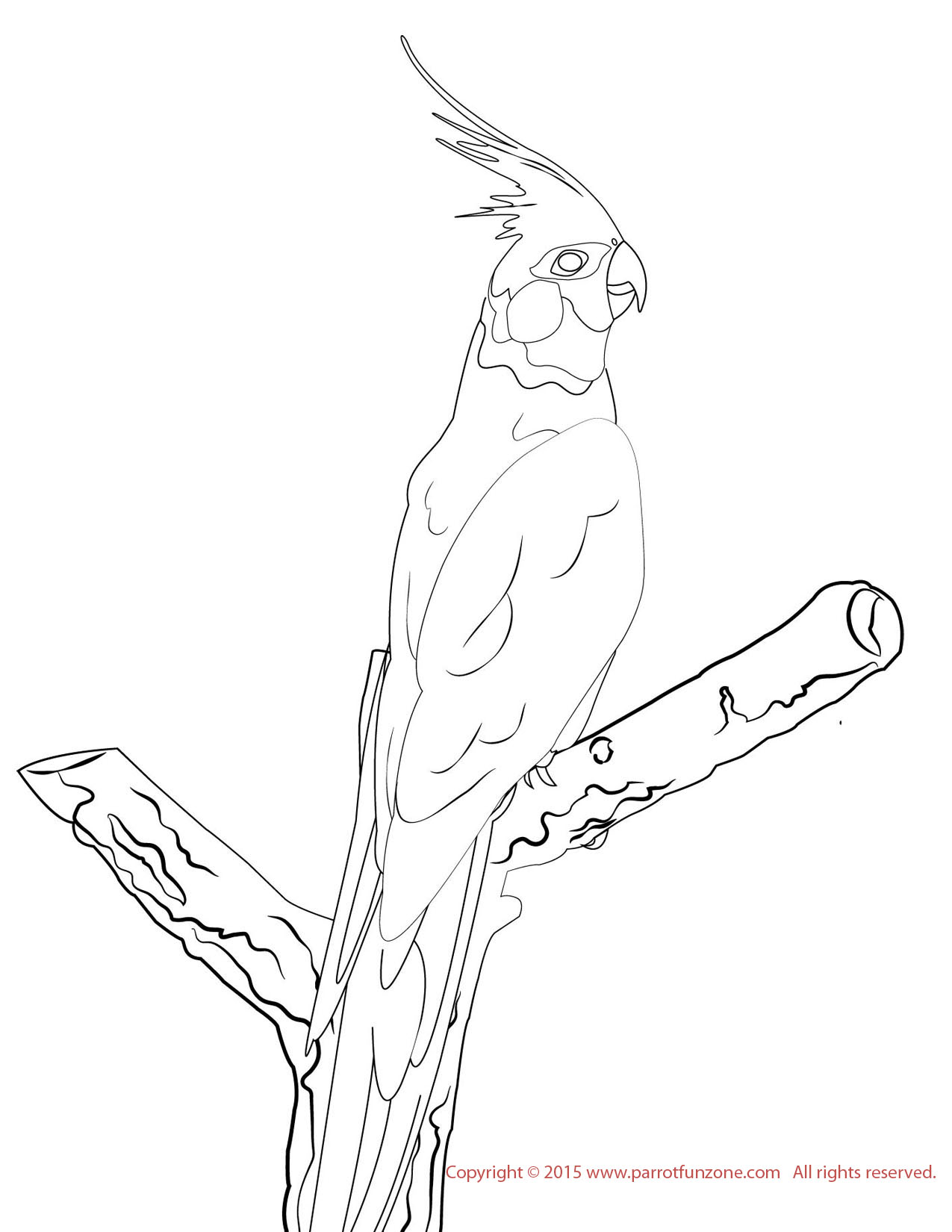 Hyacinth Macaw Lineart Coloring Page Stock Illustration 762806032   1650x1275