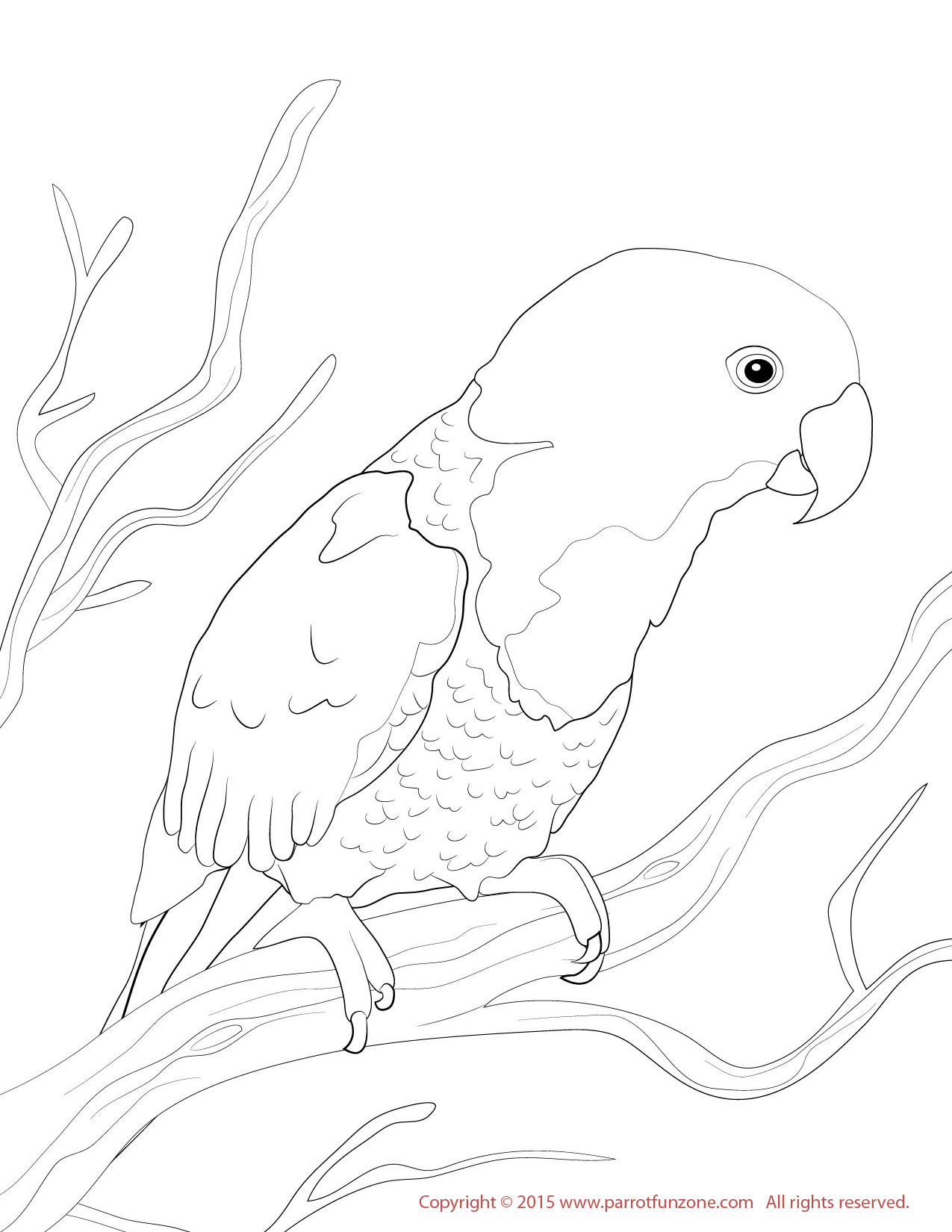 female eclectus coloring page