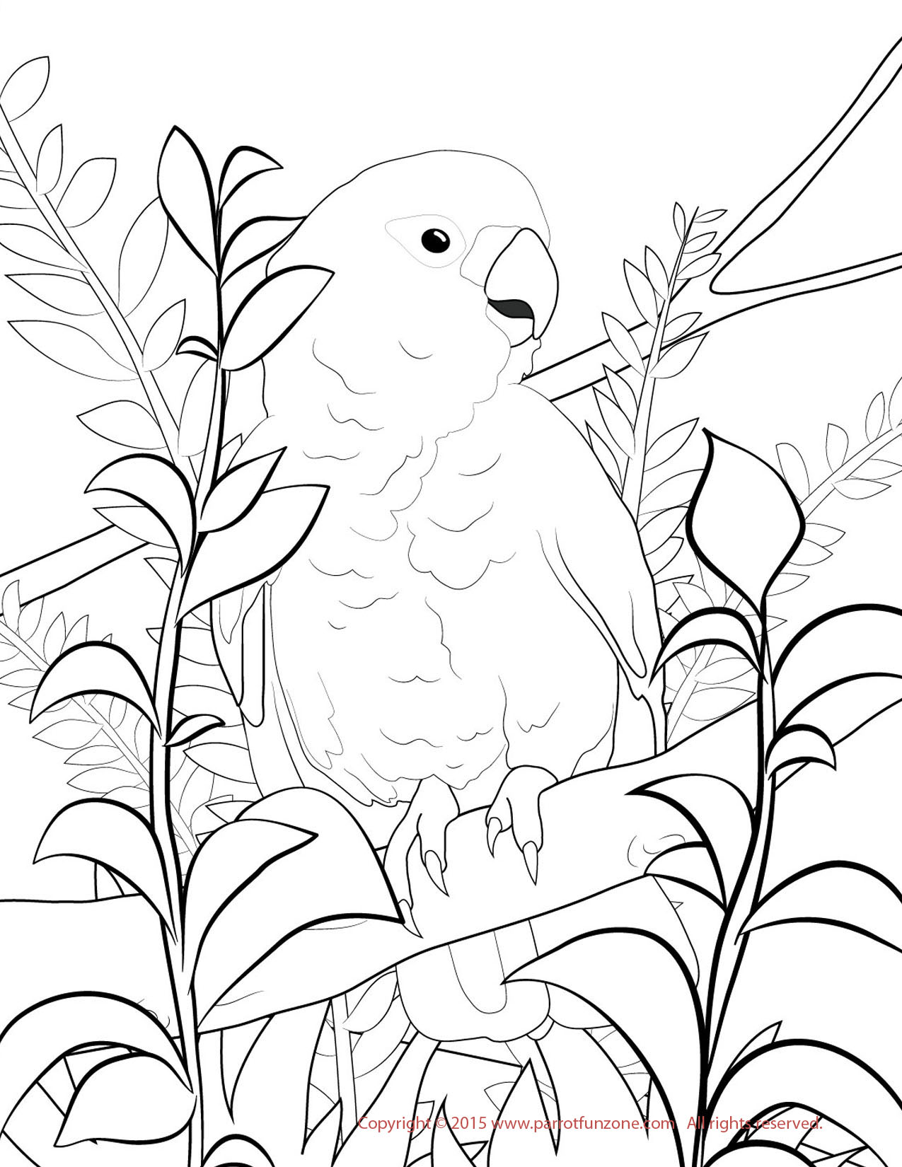 goffin cockatoo coloring page
