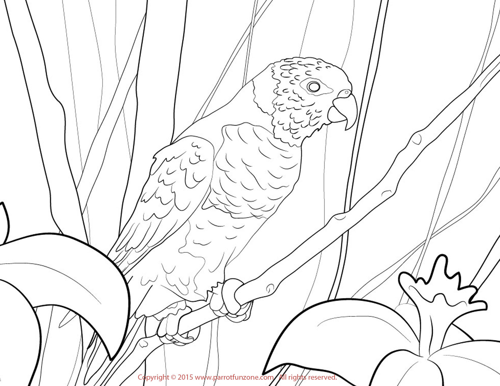 lorikeet coloring page
