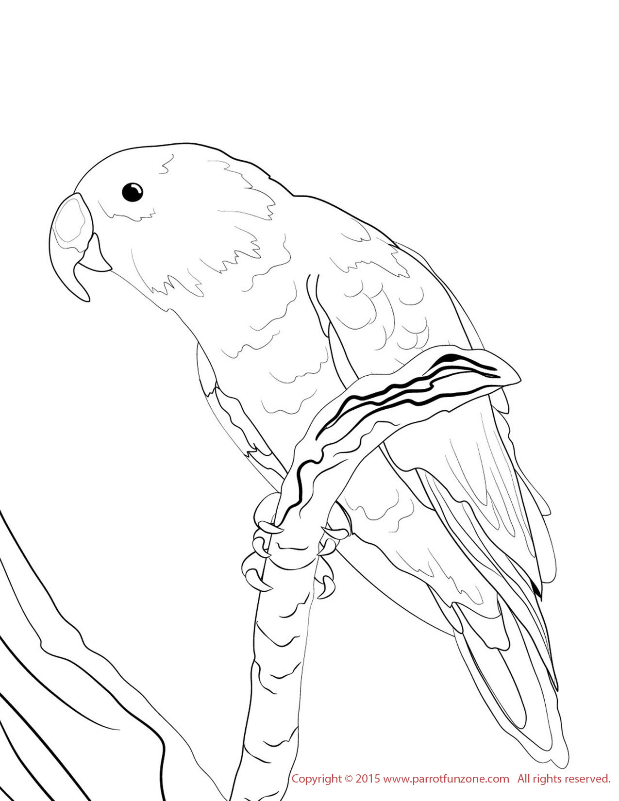 Parakeet Coloring Pages Macaw Coloring Pages Hyacinth Macaw Coloring Page Fun Free With