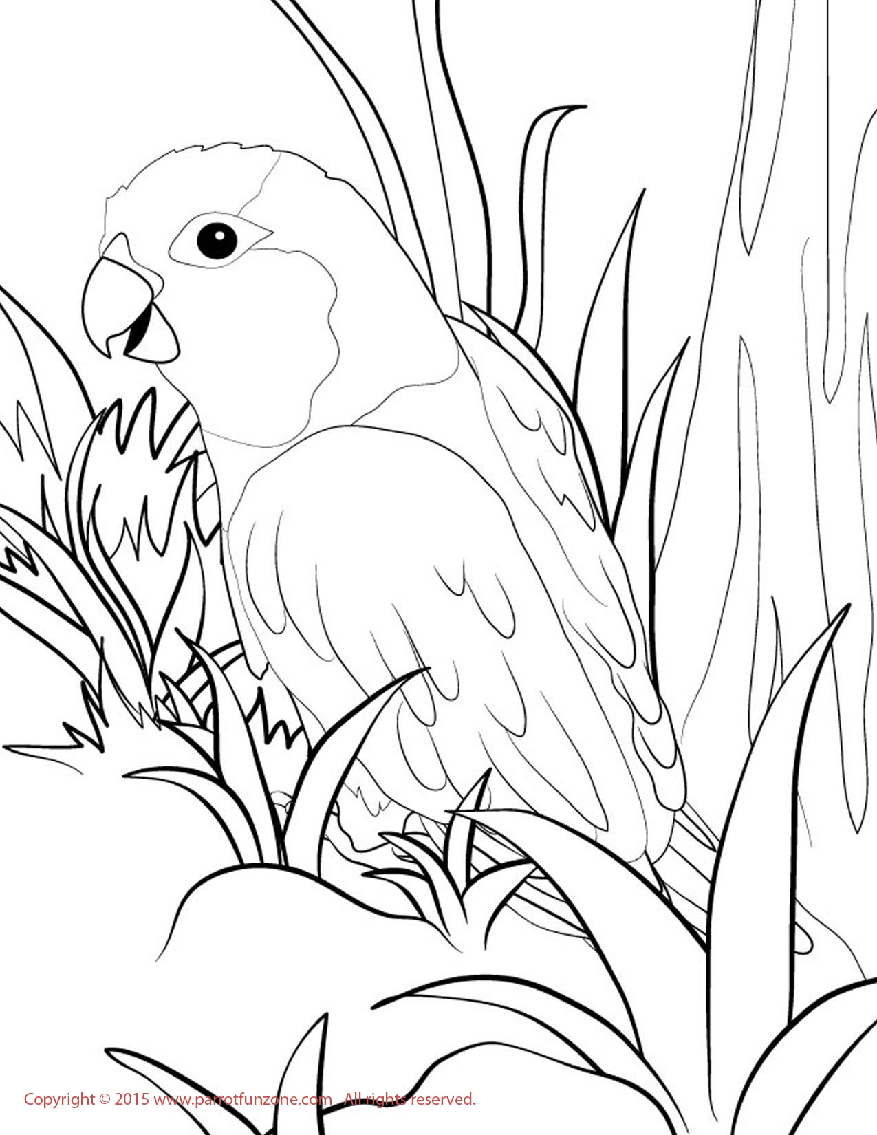 parrotlet coloring page