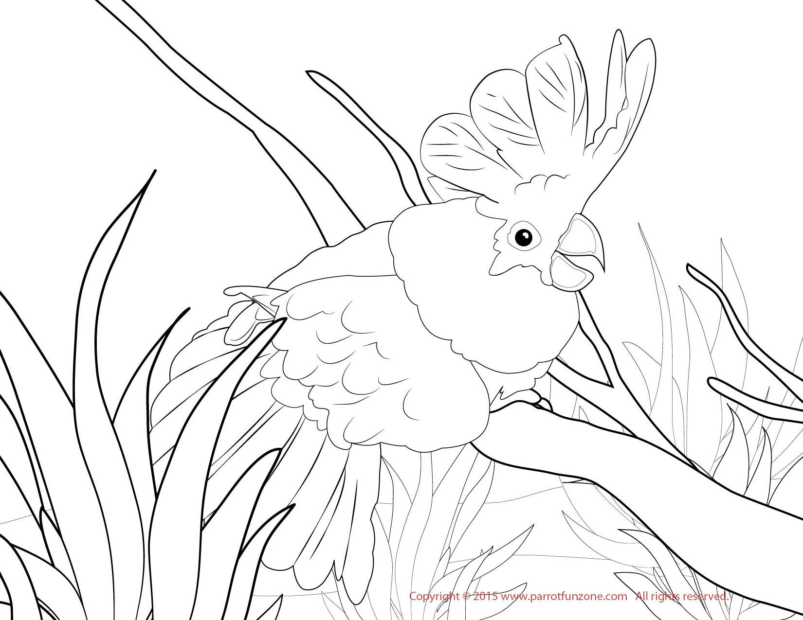 Umbrella Cockatoo Coloring Page