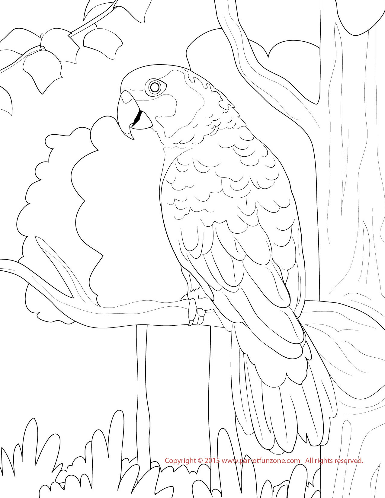 yellow nape amazon coloring page