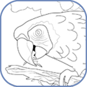 scarlet macaw coloring page - coloring pages